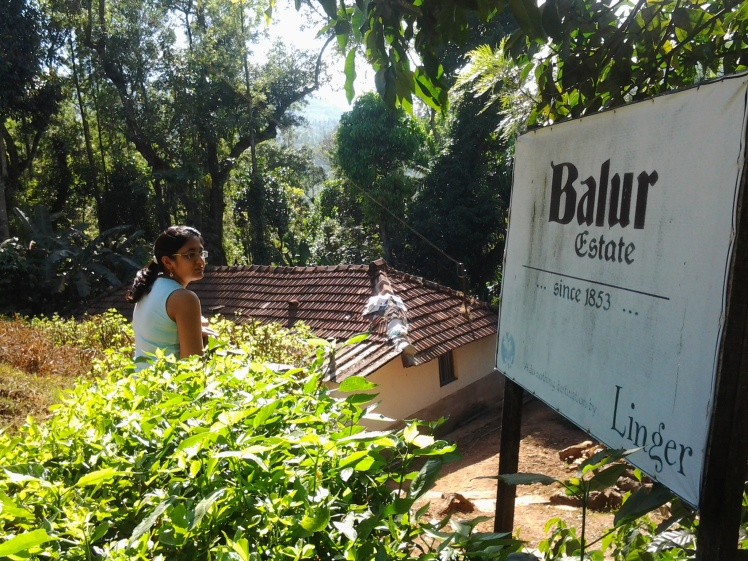 Balur Estate - a 400 acre coffee plantation since the 1800s.